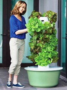 It needs only a space of feet by feet. The basic Tower Garden unit is 5 feet tall and can grow 20 vegetable, flower, and/or berry plants vertically, uses of the water that the same plants would require conventionally, grows nearly Hydroponic Gardening, Organic Gardening, Gardening Tips, Hydroponic Solution, Hydroponic Lettuce, Aquaponics Greenhouse, Indoor Vegetable Gardening, Juice Plus Tower Garden, Berry Plants