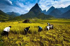 Place: Sapa, Vietnam  Team Work by Ratnakorn Piyasirisorost on 500px.