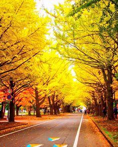 見頃を迎えた、北海道大学銀杏並木。 いつにも増して、今年の秋は早足… Snowman, Country Roads, Twitter, Snowmen