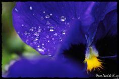 Fleur Flower Printemps Spring dansloeildekro