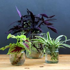 Grow Beautiful Indoor Plants In Glass Bottles - A Piece Of Rainbow-The easiest and most foolproof way to grow indoor plants in glass bottles and water. 10 beautiful plants for an easy-care indoor garden and clean air! Shade Plants Container, Shade Garden Plants, Garden Pots, Container Gardening, House Plants, Garden Ideas, Vegetable Garden, Water Plants Indoor, Potted Plants