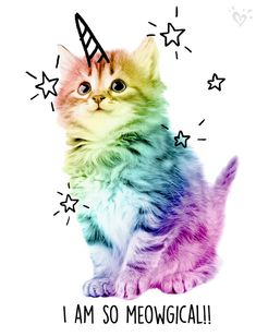New wallpaper cute cat gatos Ideas Unicorn Cat, Cute Unicorn, Rainbow Unicorn, Unicorn Puns, Real Unicorn, Beautiful Unicorn, Rainbow Dash, Baby Animals, Funny Animals