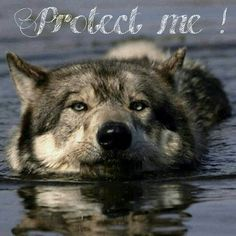 Help save the Wolfs