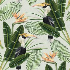 Sample Birds of Paradise Wallpaper in Green and Orange from the Tropical Vibes Collection by Mind the Gap Tropical Design, Tropical Birds, Exotic Birds, Exotic Flowers, Graphic Wallpaper, Bird Wallpaper, Green Wallpaper, Wallpaper Designs, Paradise Wallpaper