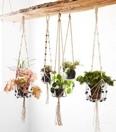 A collection of hanging plants. A collection of hanging plants. Balcony Plants, House Plants Decor, Indoor Plants, Balcony Garden, Potted Plants, Diy Planters, Hanging Planters, Planter Ideas, Decoration Plante
