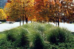 martin luther king drive chicago > streetscape design > HOERR SCHAUDT landscape architects