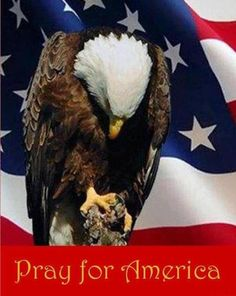 """""""Pray for America"""" * A Texas Girl's Favorites Pray For America, I Love America, God Bless America, Patriotic Pictures, Eagle Pictures, Patriotic Quotes, My Champion, American Pride, American History"""