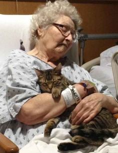 The loyal friend who visits his injured owner in the hospital every day: