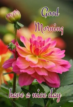 💗🌺🌺💗 Good Morning Gif Images, Good Morning Images Flowers, Good Morning Beautiful Images, Good Morning Roses, Hindi Good Morning Quotes, Good Morning Inspiration, Good Morning Messages, Good Morning Greetings, Morning Pictures