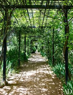 Roses and wisteria blanket a pergola that leads to the swimming pool | archdigest.com