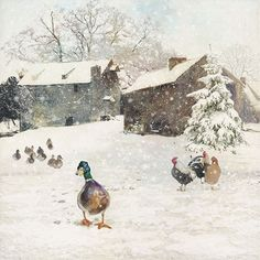 Farm Duck Five Pack - Bug Art greeting card Christmas Pictures, Christmas Art, Winter Illustration, Illustration Art, Watercolor Landscape, Watercolor Art, Duck Farming, Winter Szenen, Bug Art