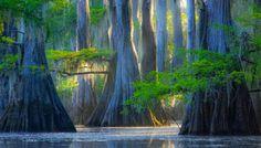 Lago Caddo, un pantano que parece encantado