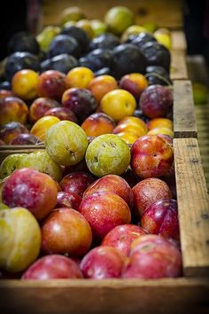 Plum Gorgeous by Caitlyn Grasso. These juicy plums will make a tasty autumn snack! Photographed at Gopher Glen near Avila, California.