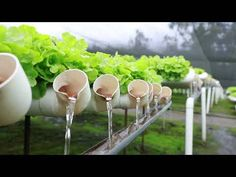 Are you thinking of starting your own hydroponics garden? When it comes to DIY hydroponics, you can Hydroponic Farming, Aquaponics Greenhouse, Hydroponic Growing, Aquaponics Diy, Aquaponics System, Growing Plants, Growing Vegetables, Indoor Hydroponics, Vegetable Garden Design