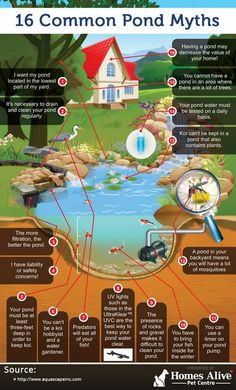 #Infographic of pond myths that many people have about backyard water gardens. Created by Homes Alive Pet Centre | Homesalive.ca