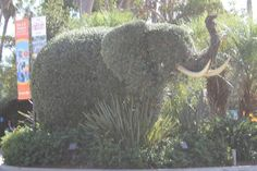 Horticultural Elephant, San Diego Zoo  |  2929 Zoo Drive, San Diego, CA