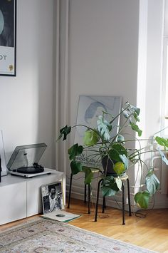 / I finally got a vinyl player! Seoul Apartment, Outside Room, Interior Plants, Cosy, Planting Flowers, Interior Decorating, Sweet Home, Living Room, Green Walls