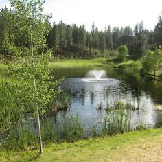 The pond located next to the trailhead in Eagle Ridge is a favorite place for wildlife.