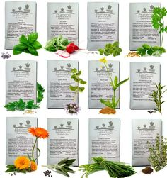 12 Types of Herb Seeds
