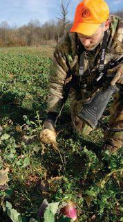 By Bill Winke When brassicas are bulb forming, deer will definitely learn to eat the bulbs. Generally, the bulbs are most . Food Plots For Deer, Deer Food, Deer Attractant, Deer Feeders, Deer Hunting Tips, Hunting Season, Bulbs, Forget, Conservation
