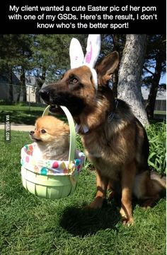"Originally saw ""My client wanted a cute Easter pic of her PORN with one of my GSDs..."""