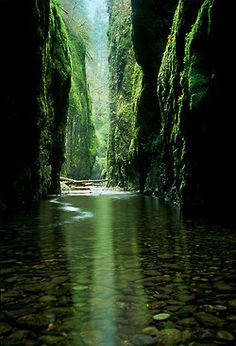 River through the Green Mountains. Nature Photography. I believe this is Oneonta Gorge in the Columbia River Gorge in Oregon.