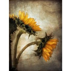 Vintage Sunflowers ❤ liked on Polyvore featuring home, home decor, vintage home decor et vintage home accessories