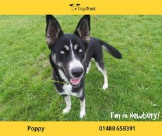 Poppy at Dogs Trust Newbury loves playing with toys and other dogs of a similar size.