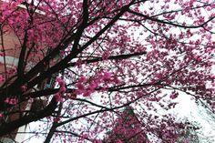 CingJing Green Green Grassland, 青青草原步道, Ren'ai Township, Taiwan Sea Level, Cherry Blossoms, Solo Travel, Farm Animals, Taiwan, Acre, Lush, Places, Green