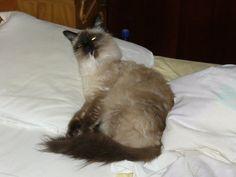 Gusy se spală .