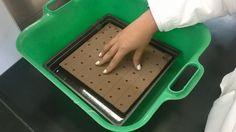 En esta imagen se puede observar clara mente, como se tuvo que presionar ligeramente la tabla donde se encuentran las semillas con el propósito, de que la esponja de plantación reciba el agua y los nutrientes necesarios para poder empezar su proceso de crecimiento