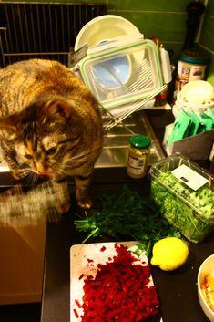 Mmmh, Thymian – Kochen mit Katze Plastik Box, Cat