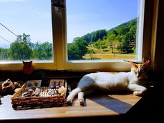 Time for a break ;) #cats #catsofinstagram #yoga #Sasbachwalden #ortenau #Schwarzwald