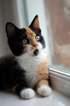 ehmm... what are you thingking about the outside world kitty??