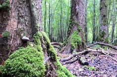 At the heart of a regional natural park of the same name name in the Aube,France, the Forêt d'Orient spreads its ancient trees. This park houses several large lakes, such as Lake Amance or Lake Temple.