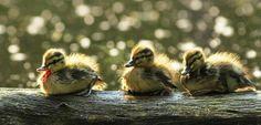 birds_photography_12
