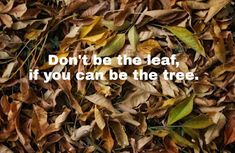 ConfusedBerry: A leaf, a branch or the roots. Self Improvement, Roots, Leaves, Thoughts, Plants, Blog, Blogging, Plant, Planets