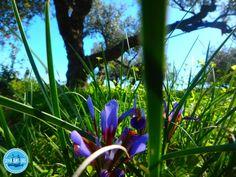 tweedaagse-survivalwandeling-griekenland Plants, Crete, Plant, Planets