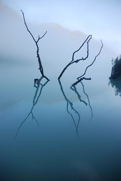 *nature photography, blue color* - reflection