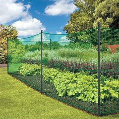 simple, inexpensive garden fencing. Not the most attractive, but it would work