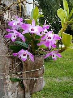 How To Keep Orchids Alive And Looking Gorgeous Orchids Garden, Orchid Plants, Succulents Garden, Garden Plants, Exotic Flowers, Fresh Flowers, Beautiful Flowers, Orchid Supplies, Growing Orchids