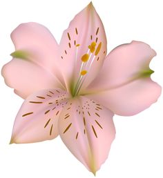 Lily Wallpaper, Next Flowers, Clipart Images, New Image, Clip Art, Projects, Pink, Pictures, Free