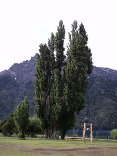 Lago Gutierrez- Bariloche