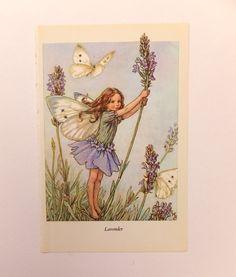 Lavender Fairy Picture