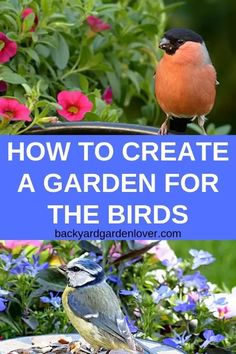 flower garden care If youd like to invite birds into your backyard, youll need to learn how to create a garden for the birds by planting the right trees and shrubs, providing clean water and shelter, and more. Spring Garden, Winter Garden, Trees And Shrubs, Trees To Plant, Organic Gardening, Gardening Tips, Flower Gardening, Vegetable Gardening, Succulent Gardening