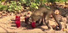 """""""O GRITO DO BICHO"""": Zoobotânico de Teresina ameniza calor dos animais"""