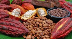 Turning Cacao Seeds Into Chocolate: From Beans to Bars – Part 1 Raw Cacao Powder, Cacao Nibs, Chocolate Treats, Homemade Chocolate, Cacao Chocolate, Peru, Cacao Fruit, Fruit Photography, Cacao Beans
