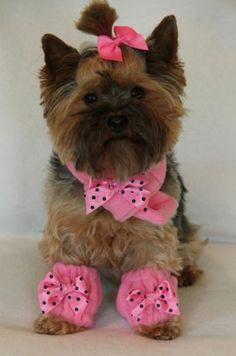 XXXS Bubblegum Pink Fleece Scarf Set dog clothes PC Dog® - Belezza,animales , salud animal y mas Girl Dog Collars, Diy Dog Collar, Pets, Pet Dogs, Puppy Clothes, Girl Dog Clothes, Dog Clothes Patterns, Small Puppies, Pet Fashion