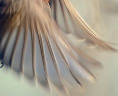 Wings? Oh not for me, I need no other pinions   Than the beating of my heart within my breast;     Wings are for the dreamer with a bird-like longing,   Whose dreams come home at eventide to nest.  Climb, Winifred Welles