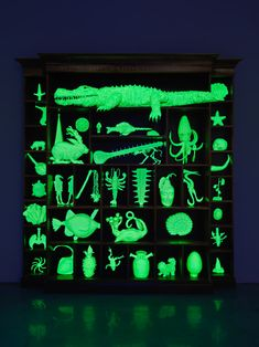 Mark Dion, The Phantom Museum (Wonder Workshop), 2015